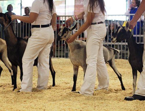 Junior Livestock