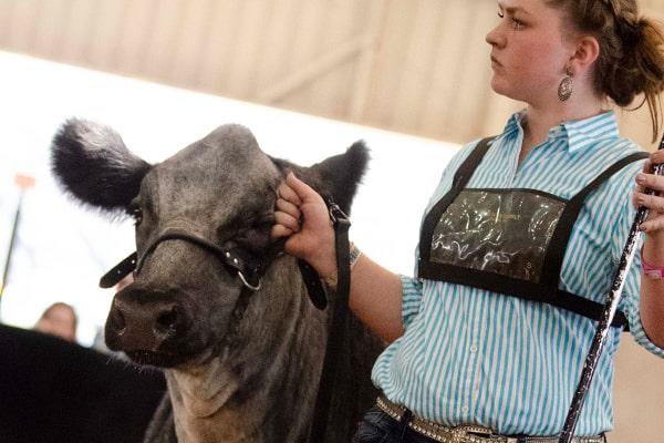 Open Beef Livestock Show