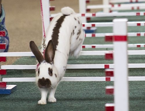 Open Rabbit Hopping