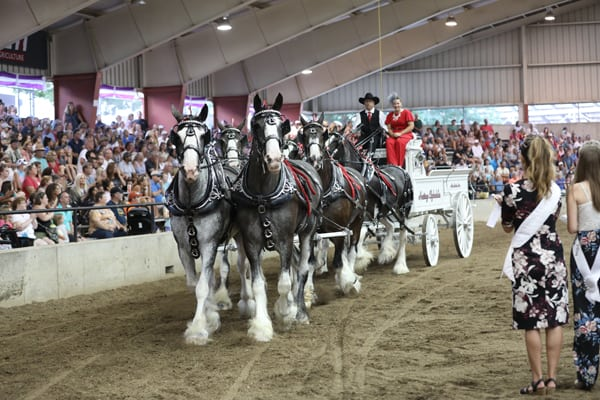 Horse Event - Hitch Show