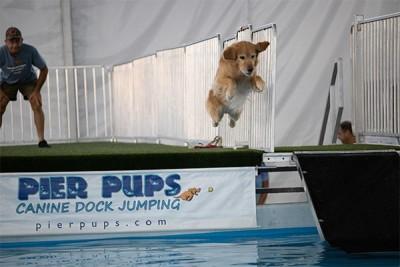 K-9 Sports Arena Dog Diving