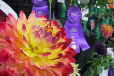 Winning Dahlias in Grand Champion Hall