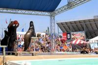 Crowd Watching Sea Lion Splash Show