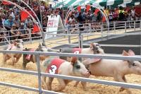 Crowd Watching Pig Races
